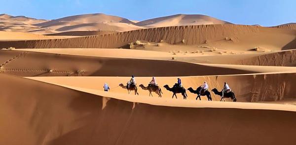 Desierto y camellos