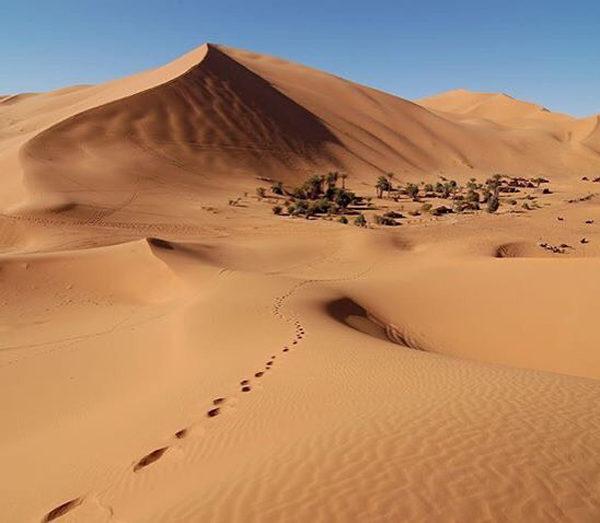 desierto y oasis