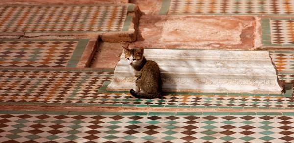 gato marruecos